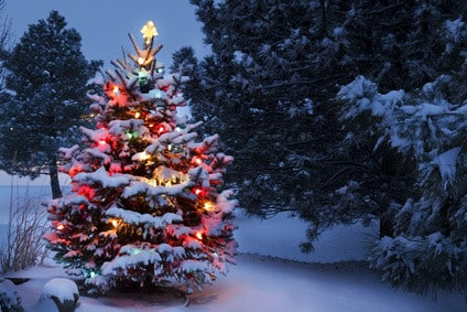 "Read Xmas Tree USA Review Before You ""Deck the Halls"""